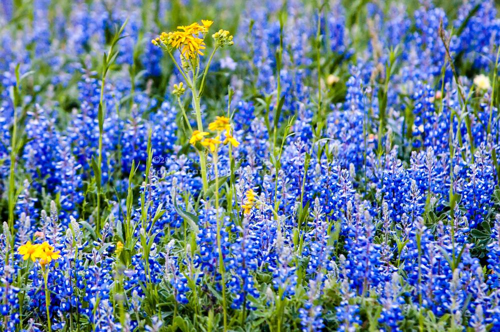 Flowers-0280.jpg