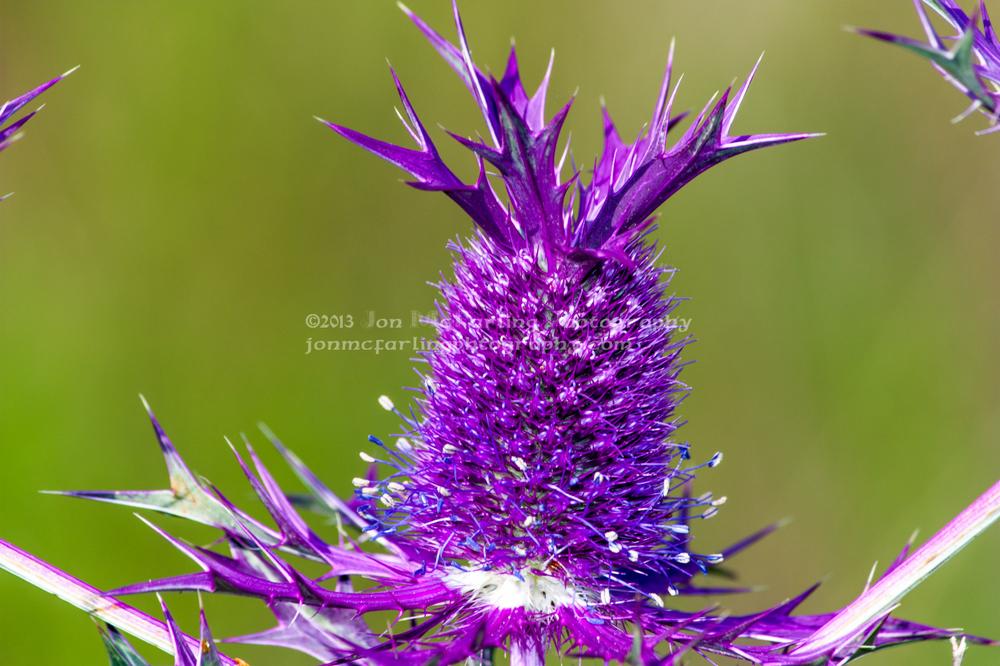 Flowers-5083.jpg
