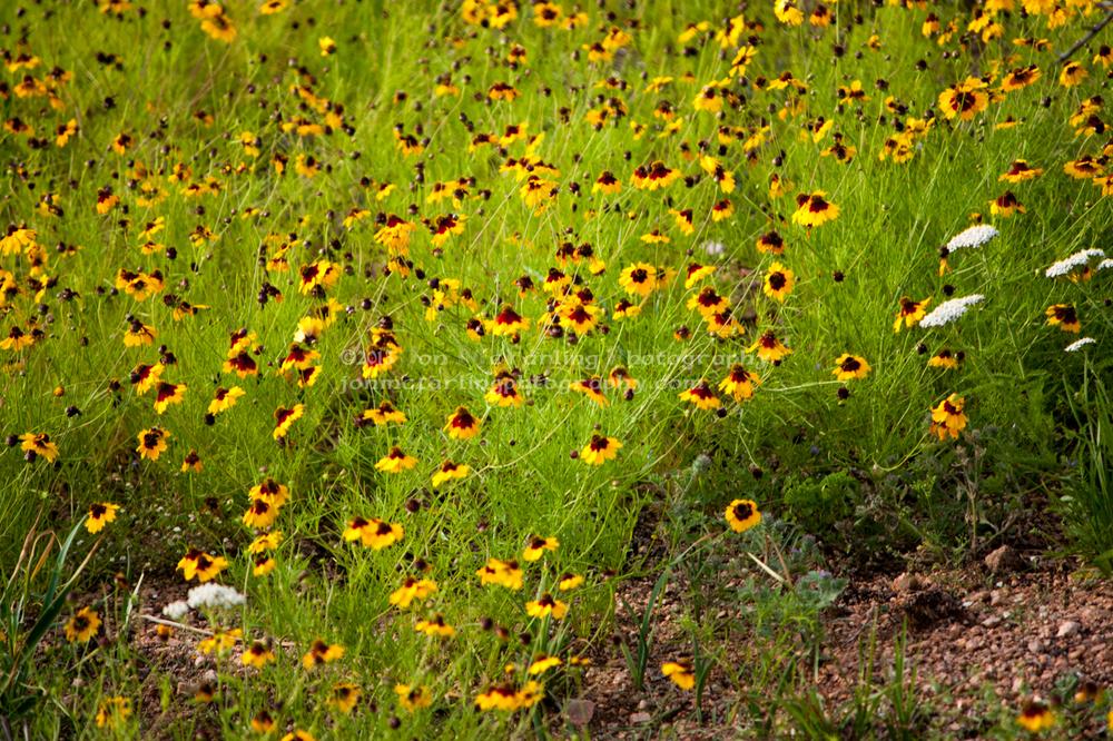 Flowers (4 of 12).jpg
