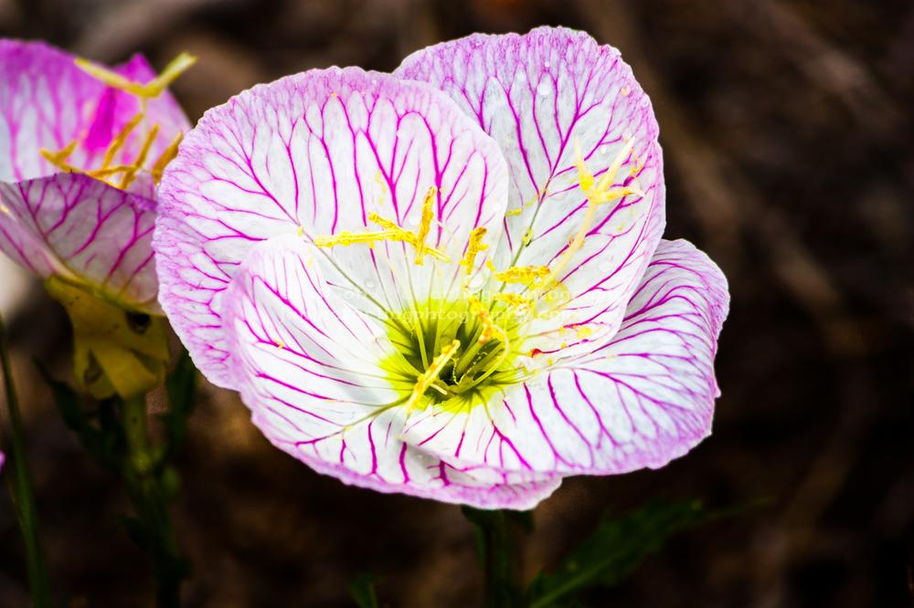 Flowers (9 of 9).jpg