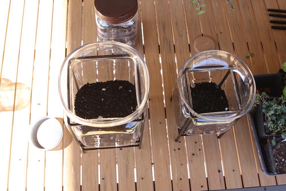 terrariumcharcoal web.jpg