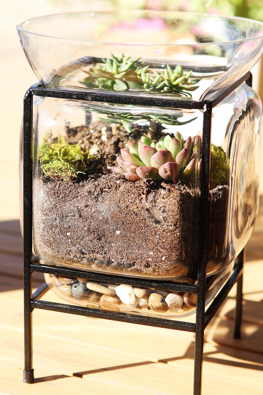succulentterrarium web.jpg