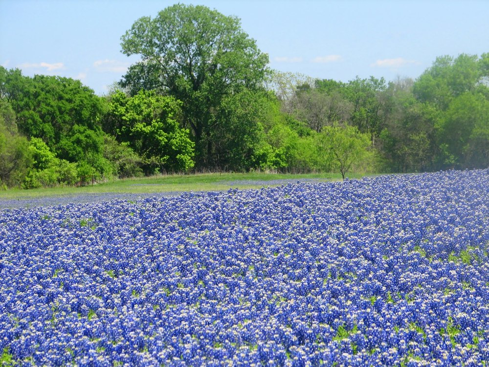 springtime in Texas. image via Richland College Library