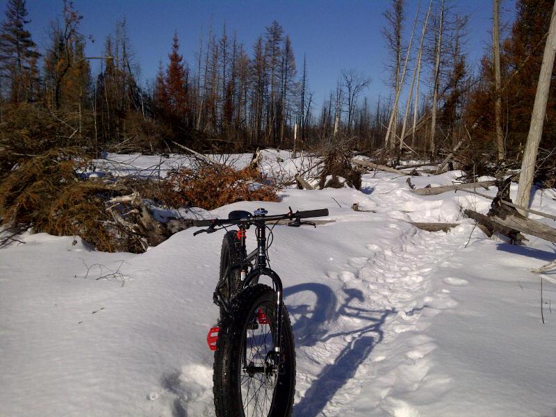 bikeinthewoods.jpg