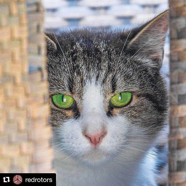 """""""Wot you lookin' at?"""". Cats love me. #Repost @redrotors (@get_repost). . . . #cat"""