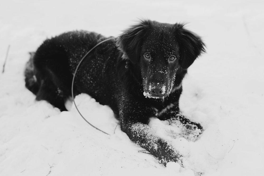 puppy-9.jpg