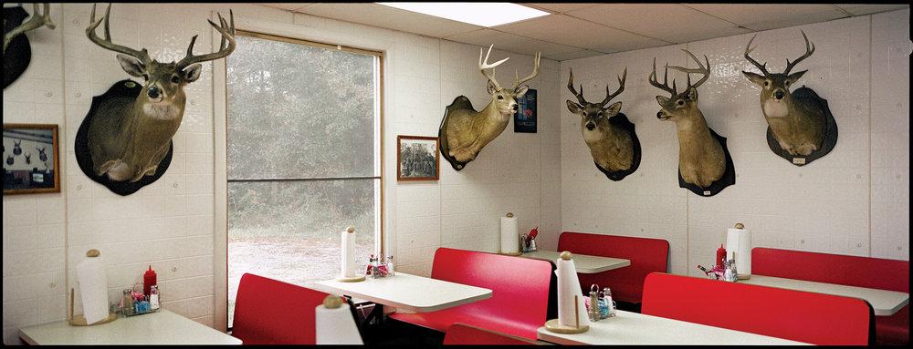 02 deerheads.siegel.jpg