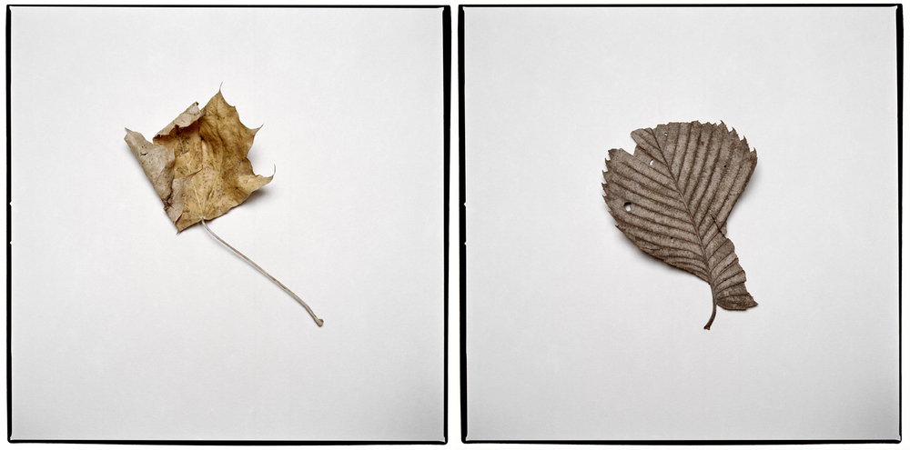Untitled No. 1 & 2from series FOLIA,2013.Olivia Johnston