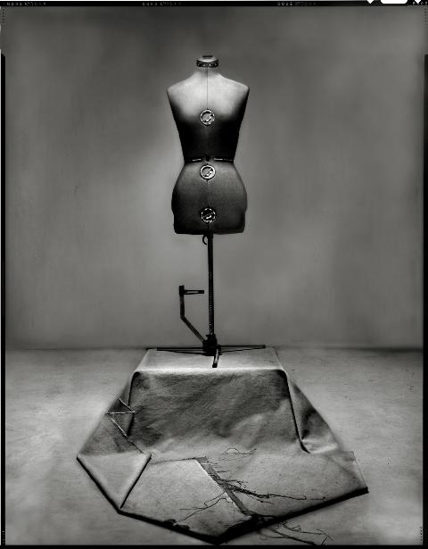 image by Michael Tardioli