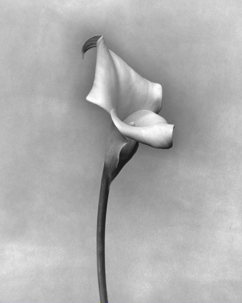 hand-bleached silver gelatin print by instructor and SPAO alumna Judy Morris Dupont