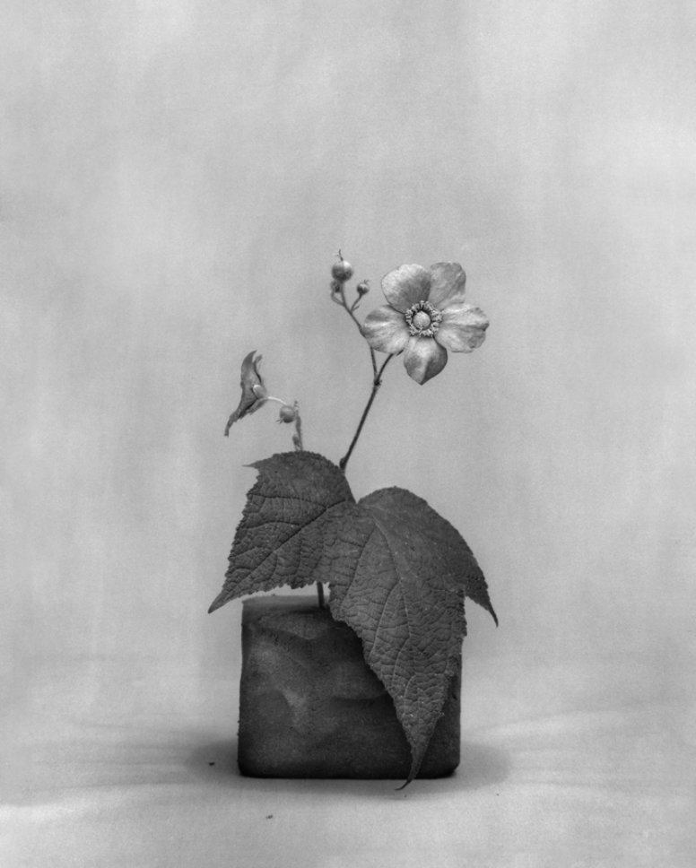 hand-bleached silver gelatin print by instructor Judy Morris Dupont