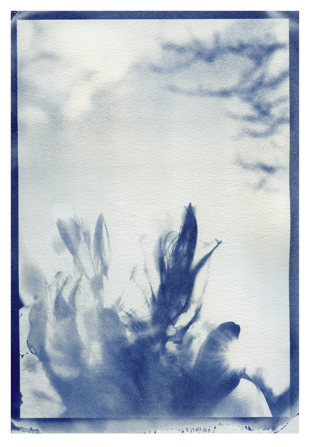 cyanotype by second year SPAO student Vivian Tors