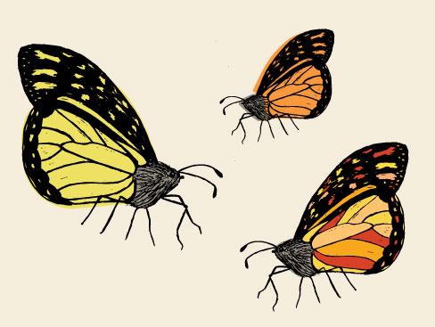 butterfly-sketch.jpg