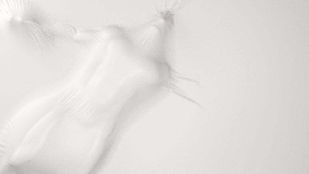 veil_frame_02.jpg