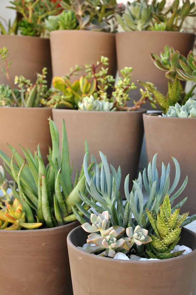 Succulent-1-72.jpg