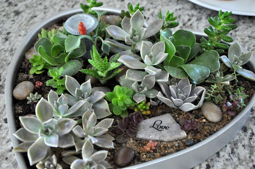 succulent-arrangement.jpg