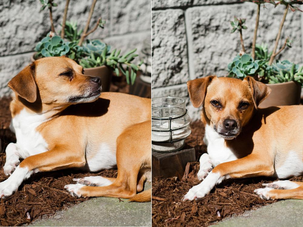 Dexter the Dog
