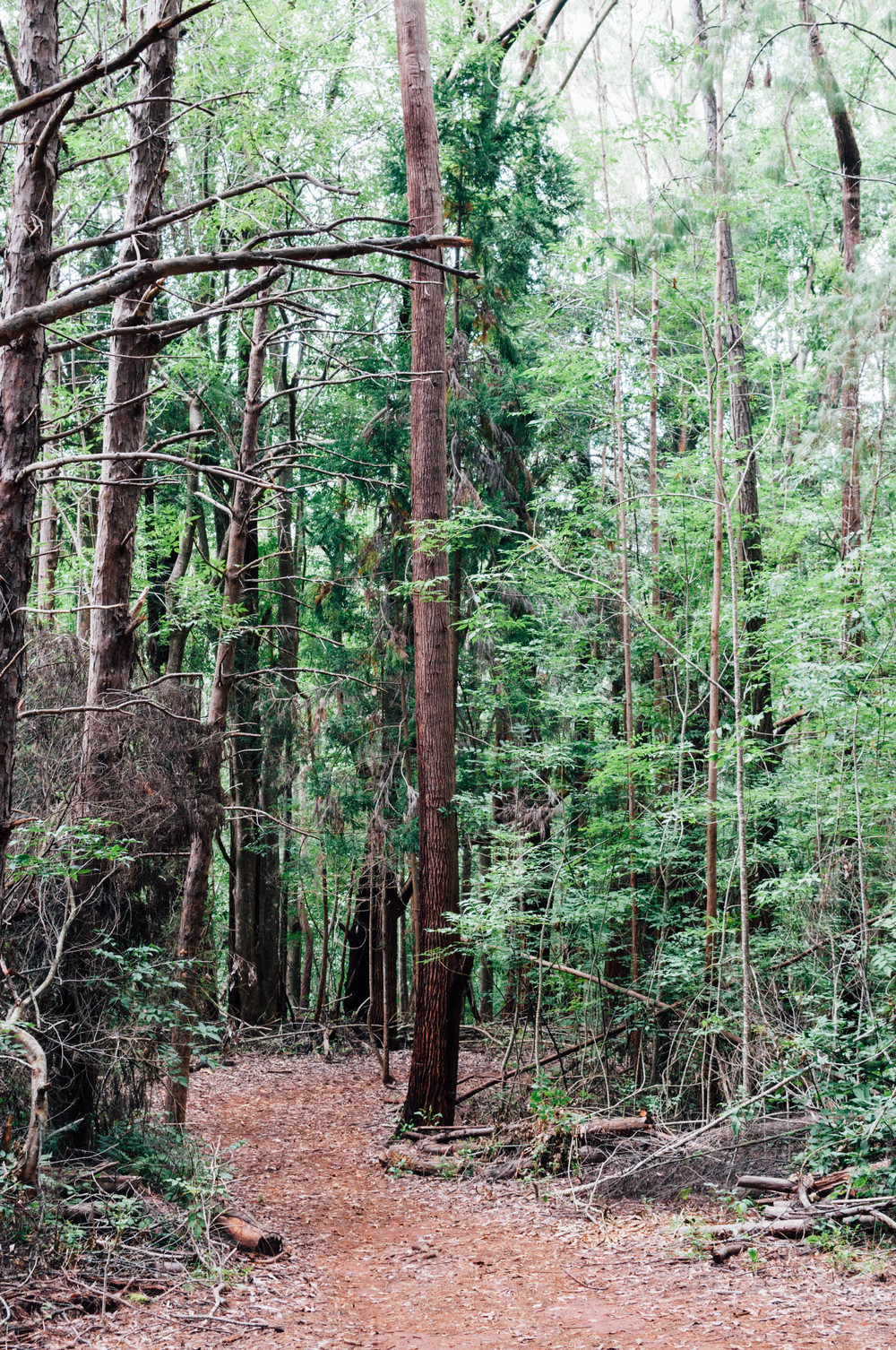 Waihou Spring Forest Reserve