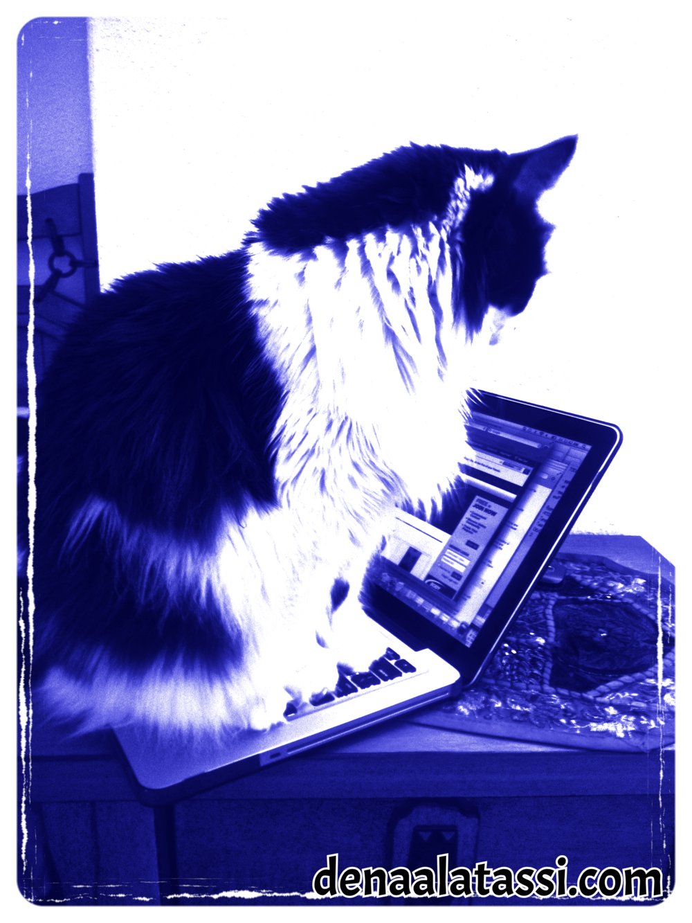 Suzie Diligently Monitoring the Computer! ~ Riyadh, 2012