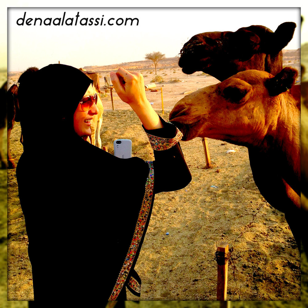 Camels in Saudi ~ August 2013
