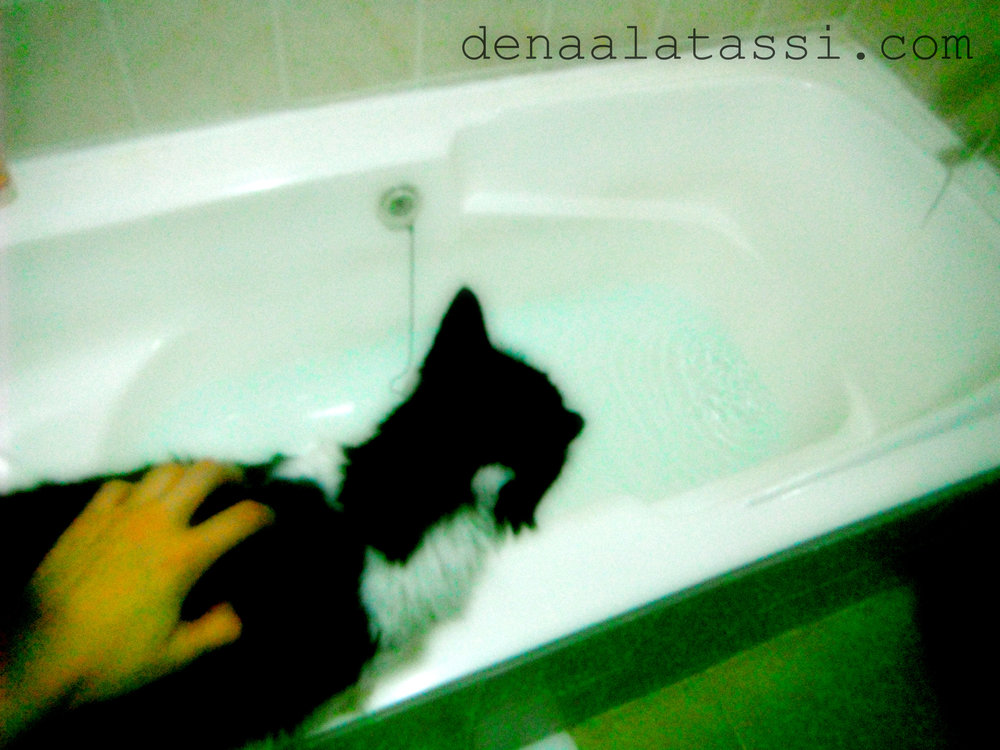 Suzie Gets Her First Bath in New Arqah ~ Riyadh, KSA 2011