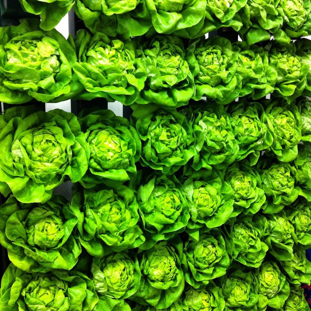 A biodynamic, organic lettuce wall