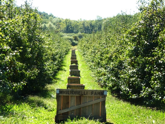 Bushel bins and pear trees at Migliorelli Farm, one of the farms that FarmersWeb collaborates with.