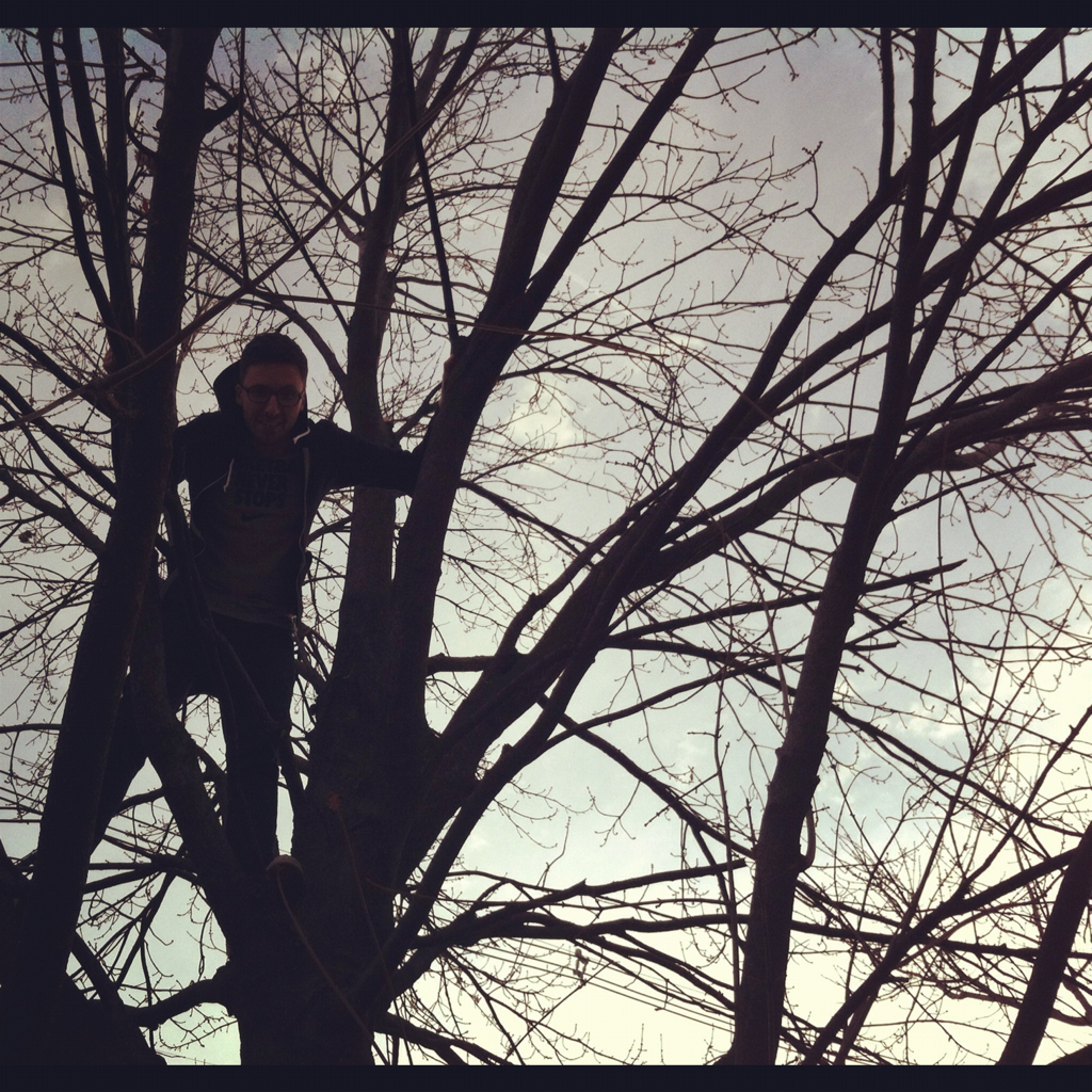 In a tree.