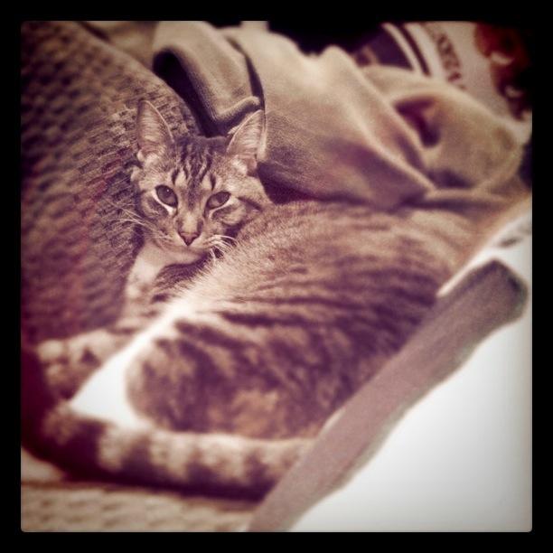 Drungal cat