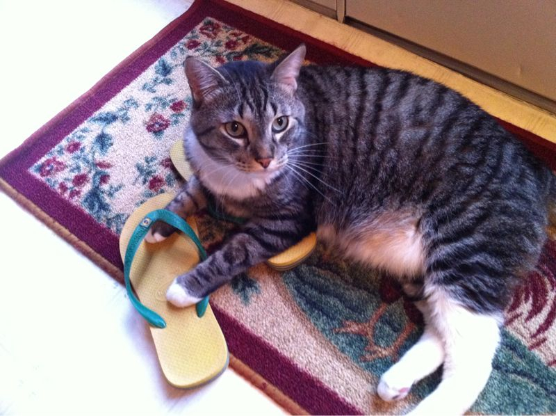 This cats obsession with shoes is getting on my nerves.
