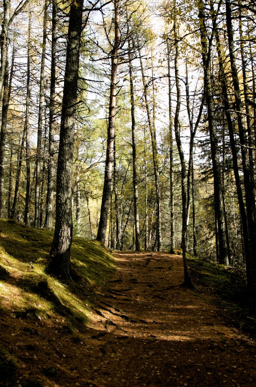 Bruar - Forrest Walk - DSC_0737.jpg