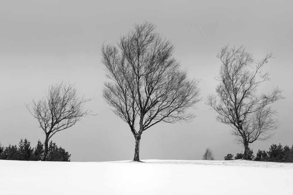 Three Trees