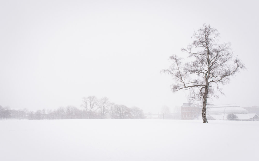 White Out on the Green