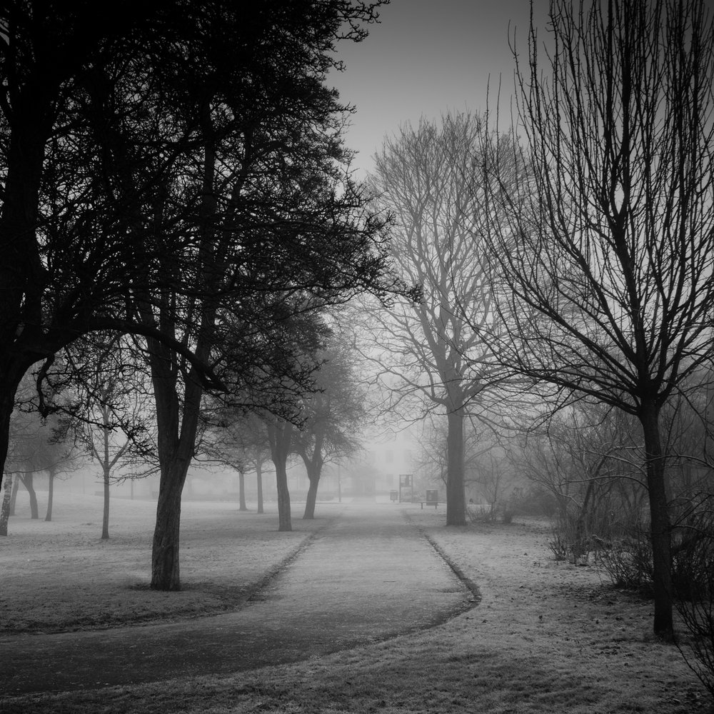 A Foggy Frosted Path