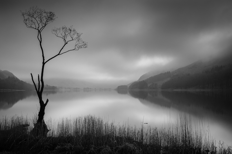 A Buttermere Tree
