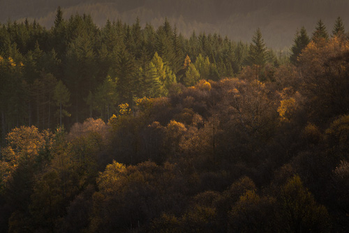 Autumn Light #1