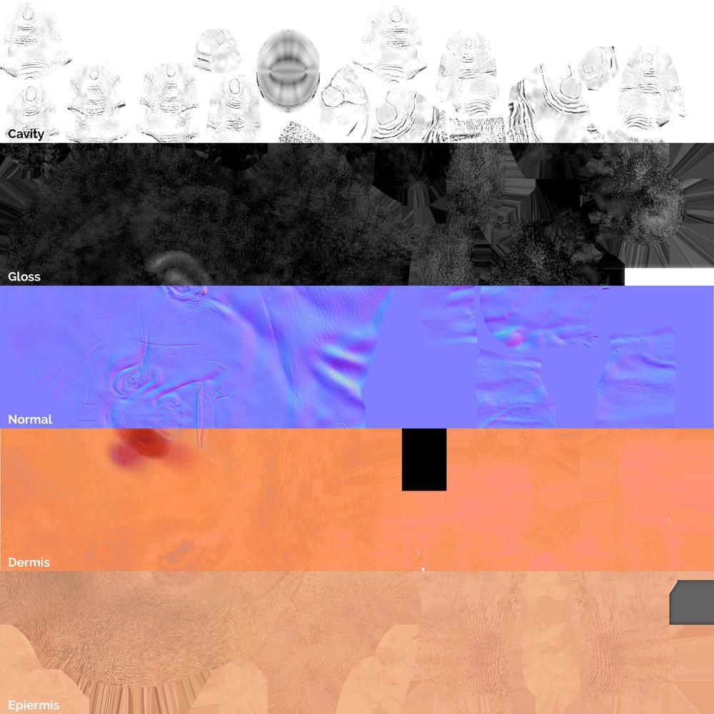 Skin Maps