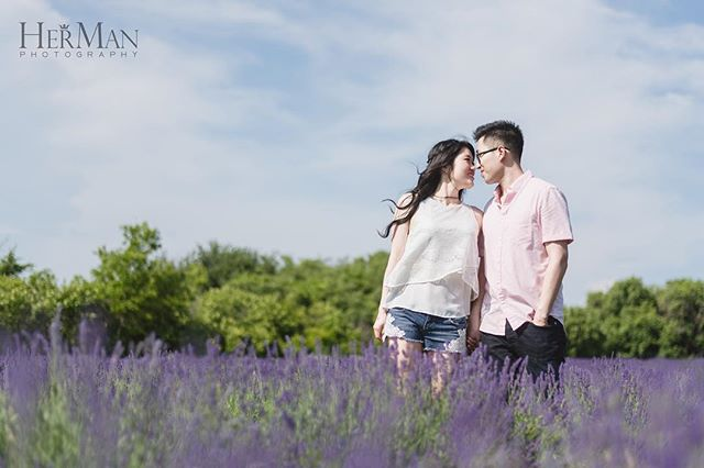 Sneak Peek Photo of Jukie & Kevin's Lavender Engagement Photoshoot from the past long weekend! Makeup: @michelle_yu_myumakeup  #lavenderfestival #lavender #lavenderengagement