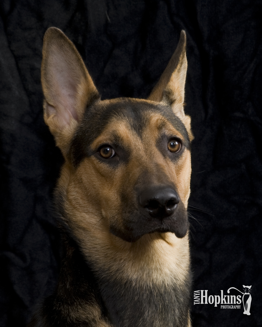 German_Shepherd.jpg