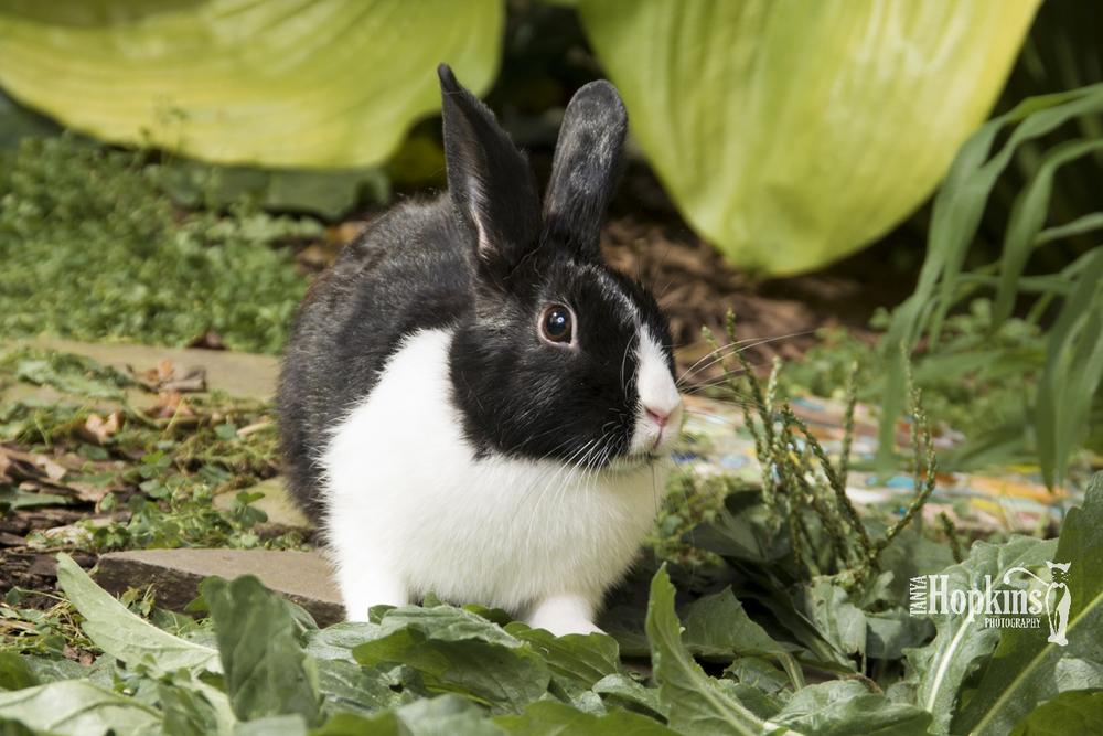 Snuggles New Zealand Bunny