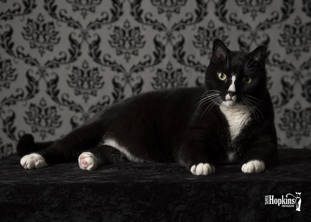 Tuxedo_Cat-1700.JPG