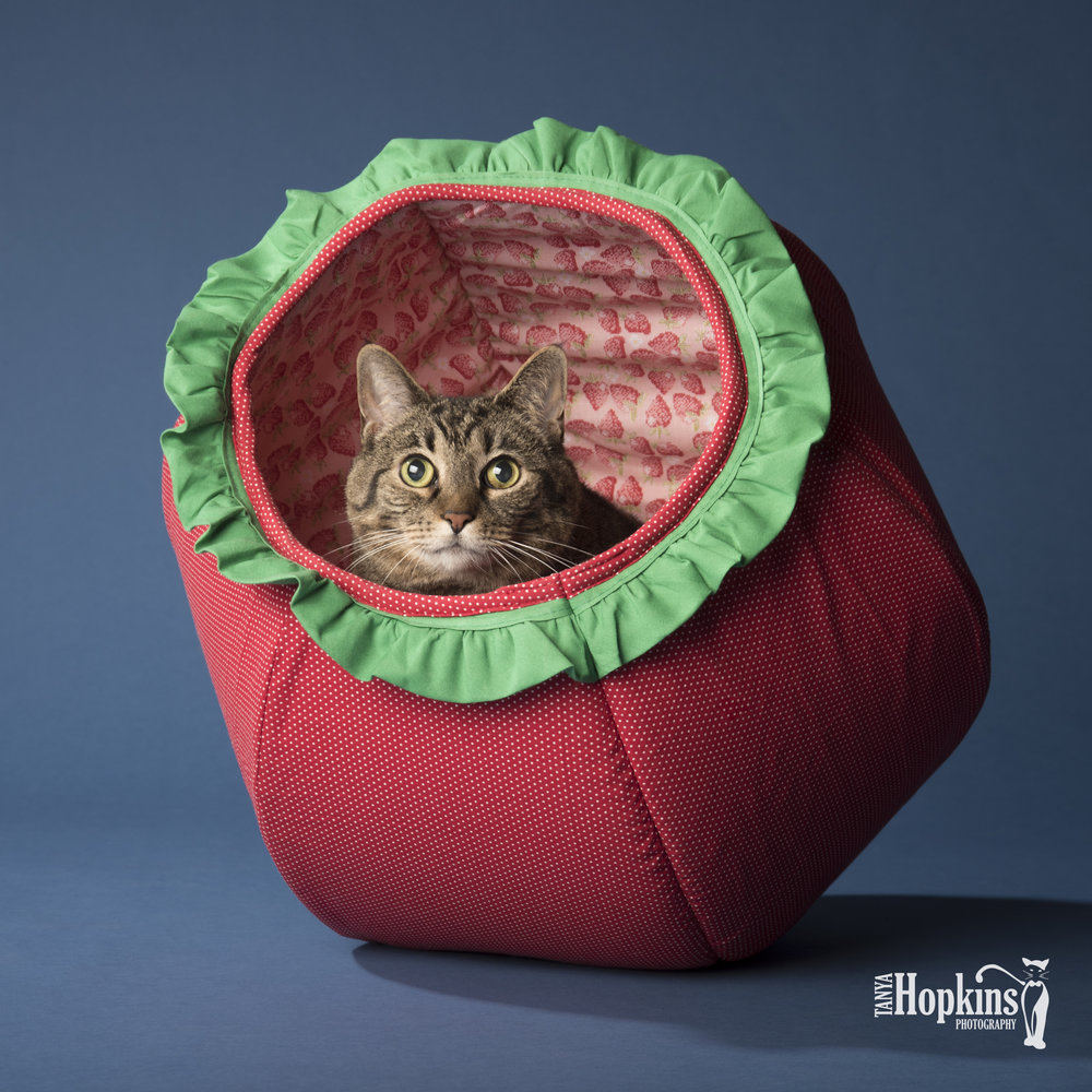 Misty featured in the  Strawberry Cat Ball® .  @mynameismistycat