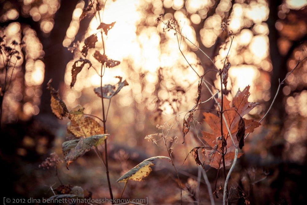 Leaf fail