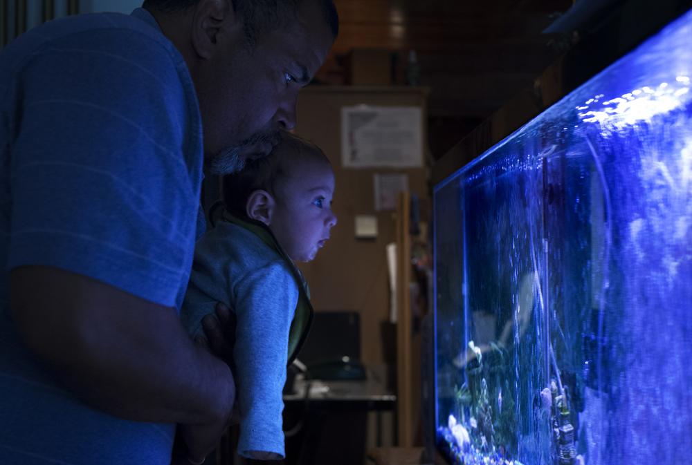 Syracuse resident and former addict Jose Moralles holds up his four-month-old son Jose Jr. so he can look at the new Red-tailed black shark that was recently added to their fish tank. The Moralles family has a number of pets, including two dogs, one cat, a turtle, and a variety of different fish.