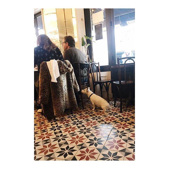 Dog of bistro