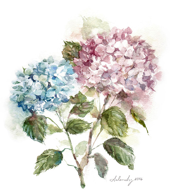 Test-Welcome-Hydrangea.jpg