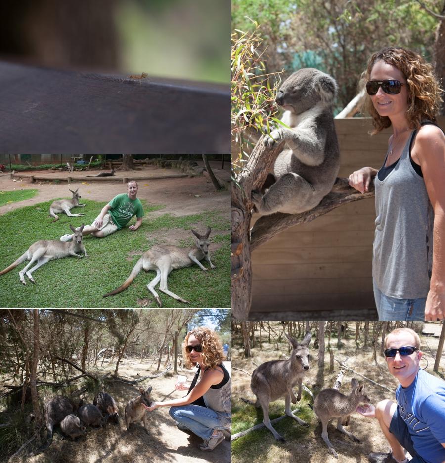 1_1_13 Australia_0021.jpg