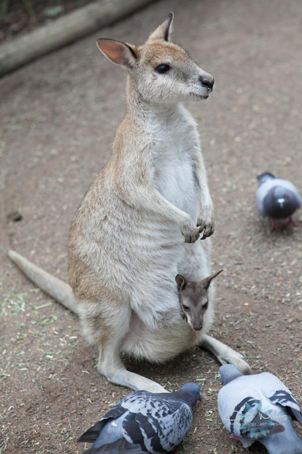 1_13 Australia12.jpg