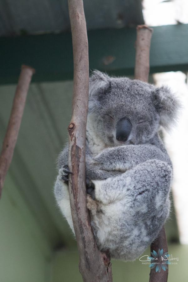 1_13 Australia13.jpg