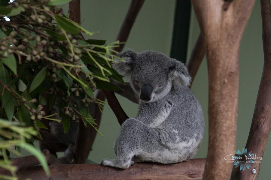 1_13 Australia14.jpg